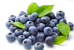 100% natural Blueberry plant extract Bilberry extract with 25% Anthocyanidins
