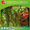 Manufacturer Supply Organic Goji Berry Extract Powder