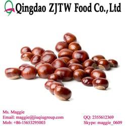 Organic fresh chestnuts raw fruit