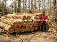 madeira teca fornecedores da tailândia