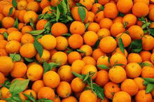 Fresh Citrus Fruit..orange