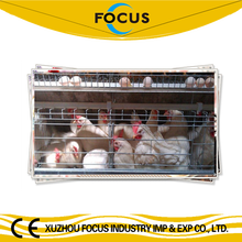 poultry chicken A or H type cages feeding equipments with full automatic type system