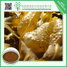 Hot China products wholesale bladderwrack seaweed kelp extract 10%