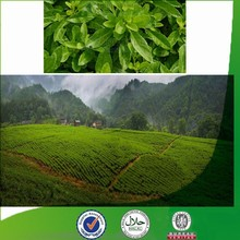 Manufacturer supply Natural & Pure favorable-price Gynura procumbens, organic calcium, new chlorogenic acid, green tea