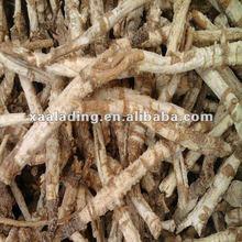 Top Quality Radix Glehniae Extract powder