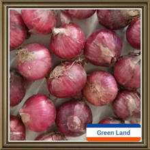 early harvest red onion