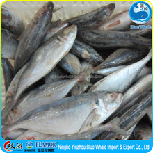 Horse Mackerel WR + 25cm (from China zhejiang ningbo)
