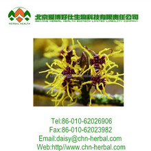 Witch hazel extract powder/extract witch hazel/hamamelis extract