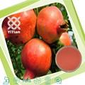 100% natürliche granatapfelsaft pulver