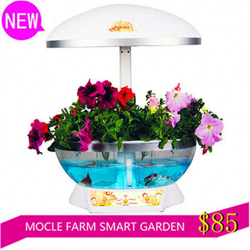 Indoor Hydroponic Vegetable Garden Buy Indoor Hydroponic