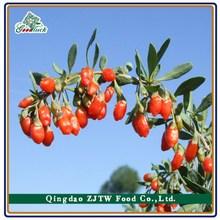 Great Dried Fruit Goji Berry, Chinese Dried Goji Berry Fruit