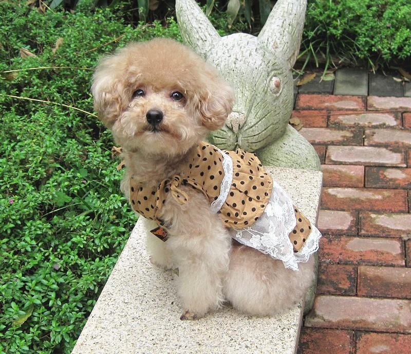 modelli di abbigliamento per cani xxx piccolo cane vestiti vestiti pet