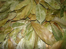 Graviola leaves, Soursop Leaves