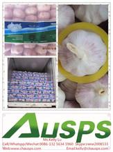 china wholesale garlic price