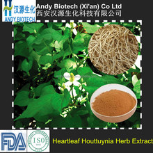 Pure Natural Organic 10:1 Heartleaf Houttuynia Herb Extract