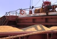 Feed corn in bulk