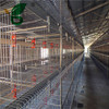 Steel H type frame automatic broiler houses for sale in Kenya
