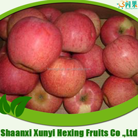 2015 sweet fresh unbagged red qinguan apple