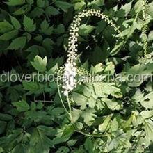 10:1 natural black cohosh P.E. Cimicifuga Racemosa (Ranunculaceae)