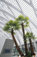 Made in China- artificial tree,artificial palm tree,artificial palm tree leaves /decorative palm tree/japanese trees and plants