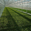 Easy set up translucence mesh PE Greenhouse with rolling up door