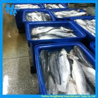 Top quality frozen mullet fish for sale