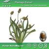 Plantain Extract, Plantain Extract Powder, Plantain Extract 5:1