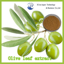 Factory Price Key Product Supply Great Quality oleuropein hydroxytyrosol 98% Oleuropein Extract