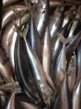 Sea frozen pacific mackerel hot price Scomber Japonicus/50-60pcs whole round