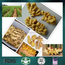 Wholesale fresh ginger with high quality