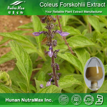 100% Natural Coleus Forskohlii Extract 4:1~20:1--NutraMax Supplier