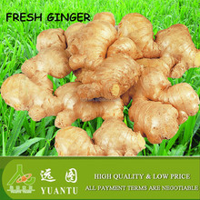 buyer request for fresh ginger