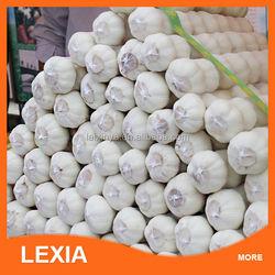 pure white garlic in bulk