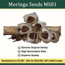Moringa Seeds For Plantation