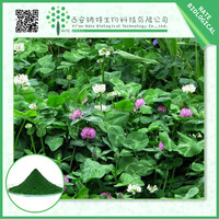 TOP Quality Red Clover Extract Isoflavones 10:1 by TLC