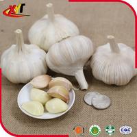 Good quality fresh garlic Pure white garlic 4.5cm-6.0cm