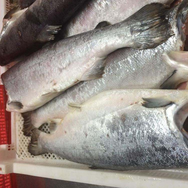 Поставщики замороженной рыбы