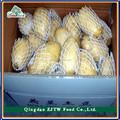 Frais pommes de terre en europe, Haute qualité hollande pommes de terre