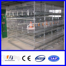 New !!! poultry farming/ chicken cage for India