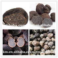 High Demand Products Sell Truffle Tuber Mushrooms Sale,Wild Source Agriculture Products Black Truffle In Stock