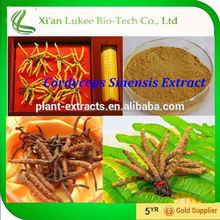 Leave customer profit/Cordyceps sinensis extract/Cordycepin 1% HPLC