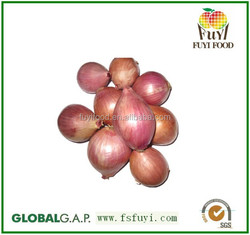 Chinese red onion shallot