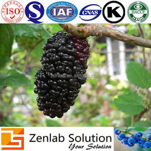 natural mulberry fruit extract, mulberry extract cosmetics industry, mulberry extract for lipstick color