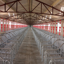animal automatic feeding system for pigsty
