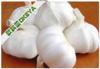 2014 OKEYA Garlic, Natural garlic, Fresh Garlic