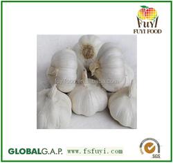 wholesale fresh garlic price