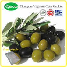 olive leaf plant extract/oliver leaf extract powder/olive leaf extract 40% oleuropein