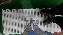 Broiler chicken corrosion resist chicken plastic slat floor / chicken slat floor by colorful PP