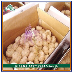 Factory Direct Sale Cheap Price Garlic Exporters China