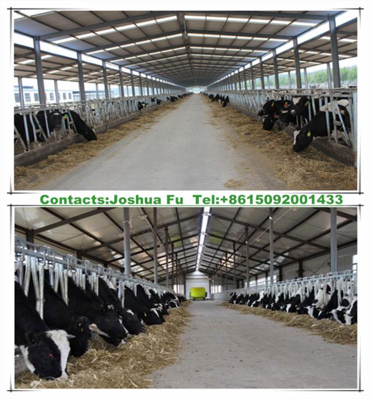 Prefab steel structure barn for farm cattle breeding industry view